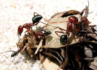 Leiningen Versus the Ants by Carl Stephenson